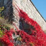 GALERIE FOTO: Un fotograf a surprins Oslo în splendoarea toamnei