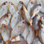 Pescuitul de peşte cod in sfârşit profitabil la Jan Mayen