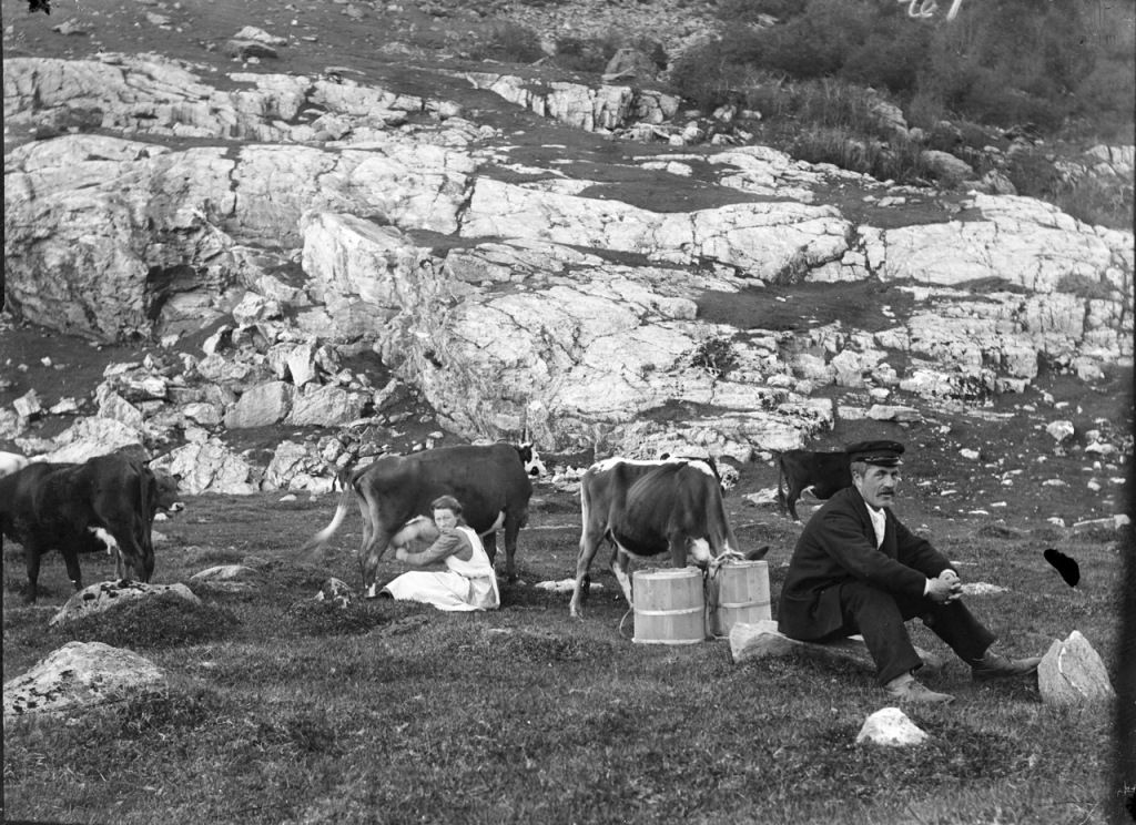 Femeie mulgând vaca și soțul ei stând pe o piatră.